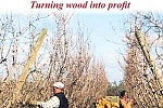 Wood2profit_cover