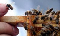 Link found between fungicides & bee decline