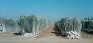 Polygro's innovative, cost effective protective solutions