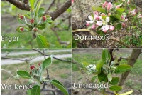 Dormancy-breaking sprays for low chill years (part 2)