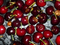 Cherry cracking still a challenge