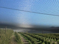 Netting saves your sanity and your crop