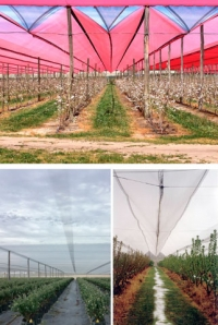 Netpro—the protected cropping innovators