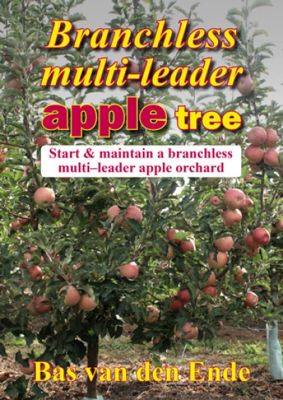 Branchless multi-leader apple tree