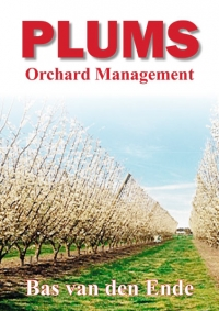 Plums orchard management