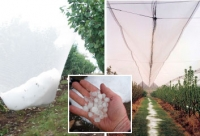 Netting protects crops from hail, heat and wind