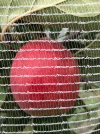 Protect your crop with Drape Net®