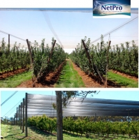 Netpro canopies: tools to optimise production