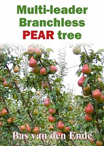 Branchless multi-leader pear tree